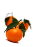 Tre mandarini Immagine Stock