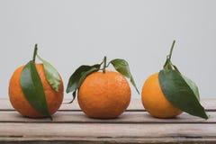 Tre mandarini con i fogli immagine stock libera da diritti