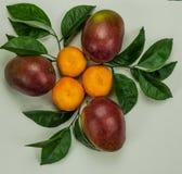 Tre mandarini con tre mango e foglie verdi fotografia stock libera da diritti