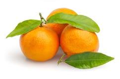 Tre mandarini isolati su bianco Immagini Stock Libere da Diritti