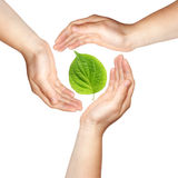 Tre mani con il foglio verde Immagini Stock