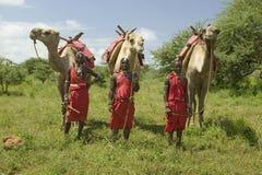 Tre Masaikrigare i traditionell röd toga poserar med deras kamel på Lewa djurlivnaturvård i norr Kenya, Afrika Royaltyfri Fotografi