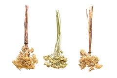Tre mazzi dei fiori secchi su un fondo bianco Immagini Stock Libere da Diritti