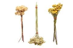 Tre mazzi dei fiori secchi su un fondo bianco Fotografia Stock Libera da Diritti