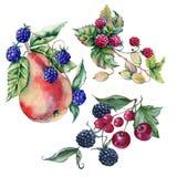 Tre mazzi dei frutti e delle bacche Isolato su priorità bassa bianca Fotografia Stock