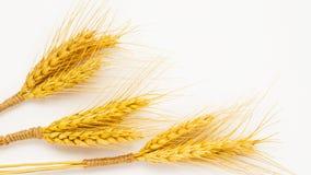Tre mazzi di grano su un primo piano bianco del fondo Fotografia Stock