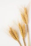 Tre mazzi di grano su un primo piano bianco del fondo Fotografie Stock