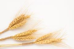 Tre mazzi di grano sul primo piano bianco del fondo Fotografie Stock Libere da Diritti