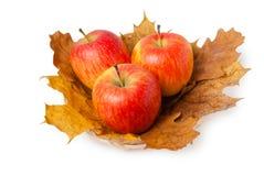 Tre mele rosse fresche mature sull'acero Fotografie Stock Libere da Diritti