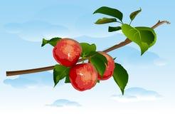 Tre mele su un ramo. Immagini Stock Libere da Diritti