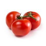 Tre mogna röda tomater på vit bakgrund Arkivbild