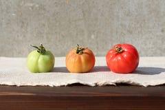 Tre mognad av tomaten Royaltyfria Foton