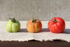 Tre mognad av tomaten Arkivbilder