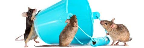 Tre mouse inquisitori Fotografie Stock