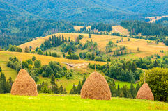 Tre mucchi di fieno sul bello plateau di estate in montagna carpatica Immagini Stock