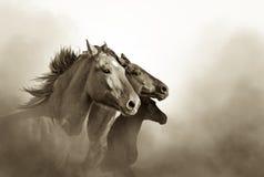 Tre mustanghästar Arkivfoto