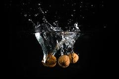 Tre muttrar i vatten Fotografering för Bildbyråer
