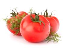 Tre nature morte delle verdure del pomodoro e delle foglie dell'aneto Immagini Stock