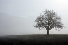 Tre nella nebbia Fotografie Stock Libere da Diritti