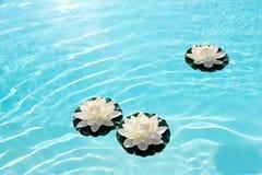 Tre ninfee o fiori di loto bianchi su acqua Immagine Stock