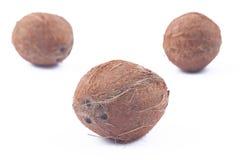 Tre noci di cocco su priorità bassa bianca Fotografie Stock