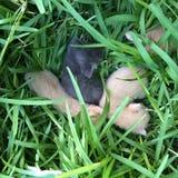 Tre nuovi gattini del bambino Fotografia Stock