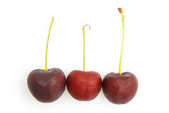 Tre nya Cherry Royaltyfri Bild