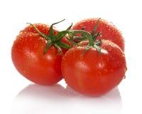 Tre nya tomater med gröna sidor royaltyfria foton