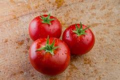 Tre nya tomater med vattendroppar Royaltyfria Foton