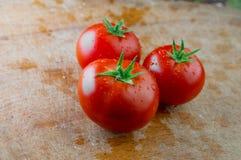 Tre nya tomater med vattendroppar Royaltyfria Bilder