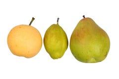 Tre olika mogna päron Arkivbild