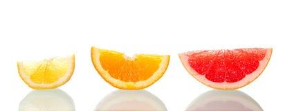 Tre ordnade citrusa skivor beautifully Royaltyfria Foton