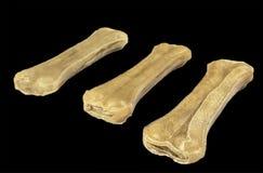 Tre ossa di cane crude Fotografie Stock