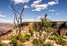 Tre på skelettet från den storslagna siktspunkten - Grand Canyon, södra kant, Arizona, AZ Arkivfoto