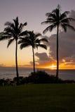 Tre palme al tramonto Immagine Stock