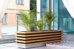Tre palme da datteri sul terrazzo di estate Fotografia Stock