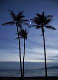 Tre palme e lune, Maui, Hawai Immagine Stock