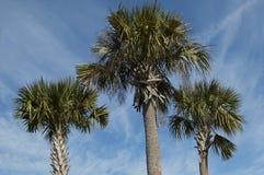 Tre palme sotto il cielo blu Immagini Stock Libere da Diritti