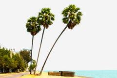 Tre palmträd Arkivbilder