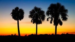 Tre palmträd på solnedgången Arkivbild