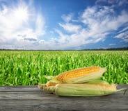 Tre pannocchie di cereale sulla tavola di legno sul campo di grano del fondo Immagine Stock Libera da Diritti