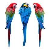 Tre papegojor arkivfoton