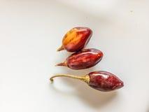 Tre peperoncini rossi rossi del cascabel Immagine Stock Libera da Diritti