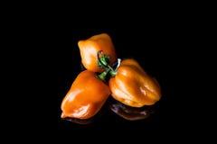 Tre peperoni gialli del habanero Fotografia Stock Libera da Diritti
