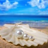 Tre perle nelle coperture Fotografie Stock