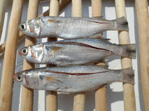 Tre pesci Immagine Stock Libera da Diritti