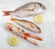 Tre pesci freschi Fotografie Stock Libere da Diritti