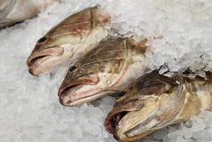 Pesci in ghiaccio Fotografie Stock Libere da Diritti