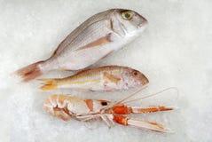 Tre pesci freschi su ghiaccio Immagini Stock Libere da Diritti