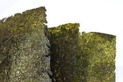 Tre pezzi di erbaccia del mare Fotografie Stock Libere da Diritti